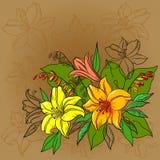 De achtergrond, de lelie en de mijn van de bloem Stock Afbeeldingen