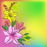 De achtergrond, de lelie en de mijn van de bloem Royalty-vrije Stock Foto's