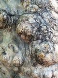 De achtergrond/de textuur van de boomschors Stock Foto