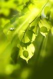 De achtergrond gaat groen weg Stock Afbeelding