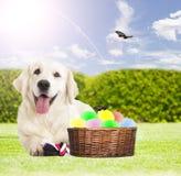 De achtergrond, de hond en de eieren van Pasen Stock Afbeeldingen
