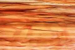 De achtergrond houten textuur gespleten beuk royalty-vrije stock foto's