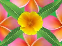 De achtergrond met frangipani bloeit en gaat weg en Stock Foto's
