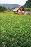 De achtergrond met groen gras, klaver bloeit, een houten gazebo met een rivier, bergen en een dorp op de achtergrond royalty-vrije stock foto's