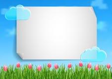 De achtergrond met met blauwe hemel, wolken, het groene roze van het graseind bloeit tulpen Royalty-vrije Stock Afbeeldingen