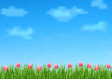 De achtergrond met met blauwe hemel, wolken, het groene roze van het graseind bloeit tulpen Stock Foto's