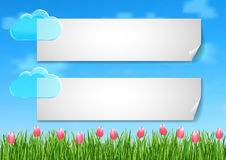 De achtergrond met met blauwe hemel, wolken, het groene roze van het graseind bloeit tulpen Stock Afbeeldingen