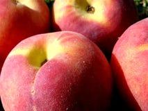 De achtergrond van abrikozen stock foto's