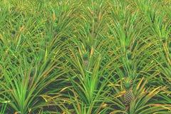 De achtergrond van de ananas stock foto's