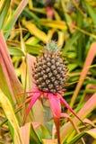 De achtergrond van de ananas stock fotografie