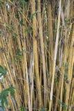 De achtergrond van bamboestelen Stock Fotografie