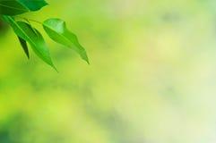 De achtergrond van bladeren Royalty-vrije Stock Afbeelding