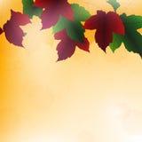 De achtergrond van bladeren Royalty-vrije Stock Fotografie