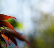 De achtergrond van bladeren Stock Foto