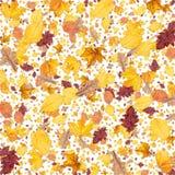 De achtergrond van bladeren (op wit) Royalty-vrije Stock Foto