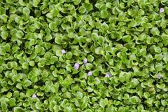 De achtergrond van bladerenwaterplanten royalty-vrije stock foto's