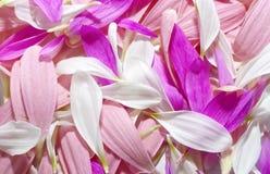 De achtergrond van bloemblaadjes stock afbeeldingen