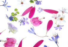 De achtergrond van bloemblaadjes royalty-vrije stock foto's