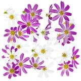 De achtergrond van bloemen Stock Fotografie