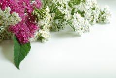 De achtergrond van bloemen Stock Foto