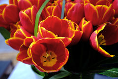 De achtergrond van bloemtulpen Mooie dichte omhooggaand van oranje tulpen BO Stock Afbeeldingen