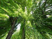 De Achtergrond van bomen Royalty-vrije Stock Fotografie