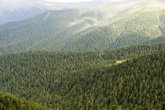 De achtergrond van bomen Stock Afbeeldingen