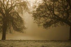 De Achtergrond van bomen royalty-vrije stock foto