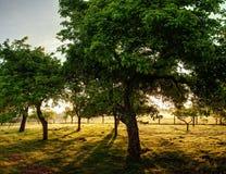 De Achtergrond van bomen Stock Foto's