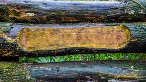 De achtergrond van boomboomstammen met één gesneden stam, de lege ruimte om uw tekst te zetten, het bos of de tuin ondertekenen r stock foto's