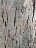 De achtergrond van de boomtextuur met onderbrekingen, geweven behang als achtergrond stock foto's