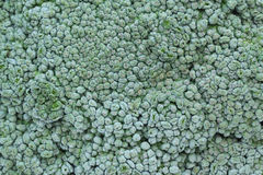 De achtergrond van broccoli Stock Afbeeldingen
