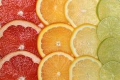 De achtergrond van citrusvruchten Royalty-vrije Stock Fotografie