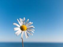 De achtergrond van Daisy Royalty-vrije Stock Fotografie