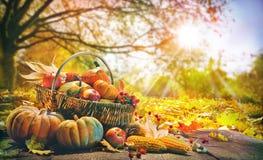 De achtergrond van de dankzegging met pompoenen stock foto's