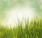 De achtergrond van de aard met gras Stock Afbeelding