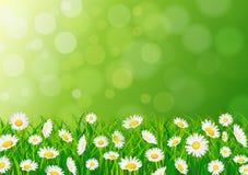 De achtergrond van de aard met gras Royalty-vrije Stock Afbeeldingen