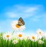 De achtergrond van de aard met groene gras en vlinder Stock Foto