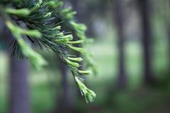 De Achtergrond van de Aard van de boom Stock Foto
