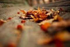 De Achtergrond van de Aard van de herfst Gemakkelijk om VectorBeeld uit te geven Stock Foto