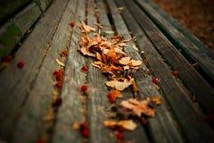 De Achtergrond van de Aard van de herfst Gemakkelijk om VectorBeeld uit te geven Stock Fotografie