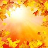 De Achtergrond van de Aard van de herfst Gemakkelijk om VectorBeeld uit te geven Royalty-vrije Stock Afbeelding
