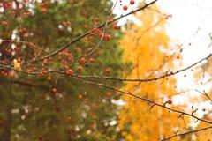 De Achtergrond van de Aard van de herfst Gemakkelijk om VectorBeeld uit te geven Stock Afbeeldingen