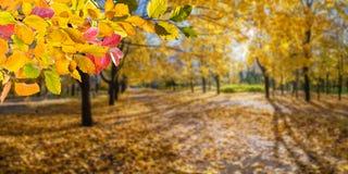 De Achtergrond van de Aard van de herfst Gemakkelijk om VectorBeeld uit te geven royalty-vrije stock fotografie