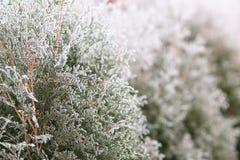 De Achtergrond van de Aard van de winter Berijpte bomen met selectieve nadruk Royalty-vrije Stock Foto