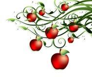 De achtergrond van de appel Royalty-vrije Stock Afbeeldingen