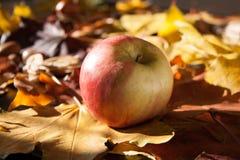 De achtergrond van de appel Royalty-vrije Stock Foto's
