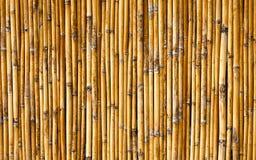 De achtergrond van de bamboemuur Stock Foto