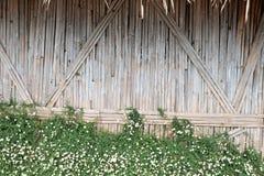 De achtergrond van de bamboemuur Stock Afbeeldingen