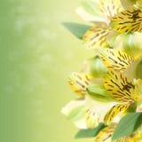 De achtergrond van de bloem Stock Afbeeldingen